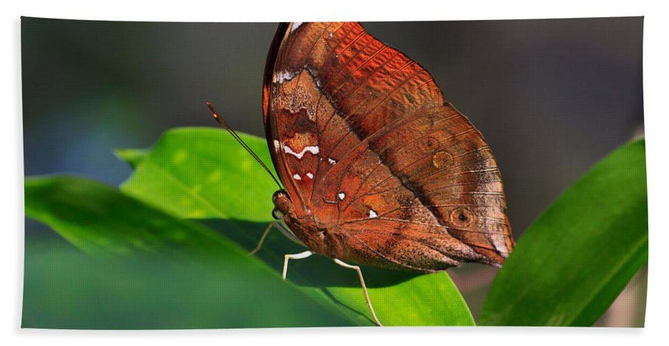 Pretty Butterfly Bath Sheet featuring the photograph Autumn Leaf Butterfly by Louise Heusinkveld