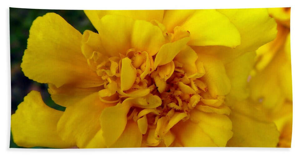 Autumn Hand Towel featuring the photograph Autumn Marigold 2 by Alys Caviness-Gober