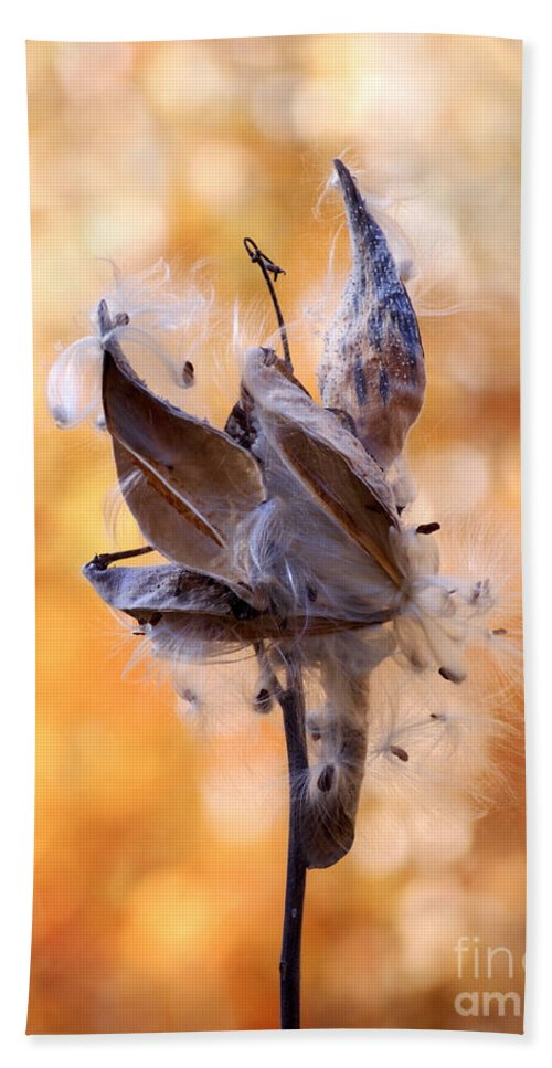Milkweed Hand Towel featuring the photograph Autumn Milkweeds by Angie Rea