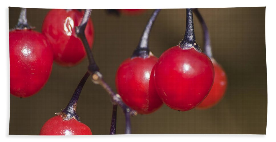 Autumn Red Berries Bath Sheet featuring the photograph Autumn Red Berries by Steve Purnell