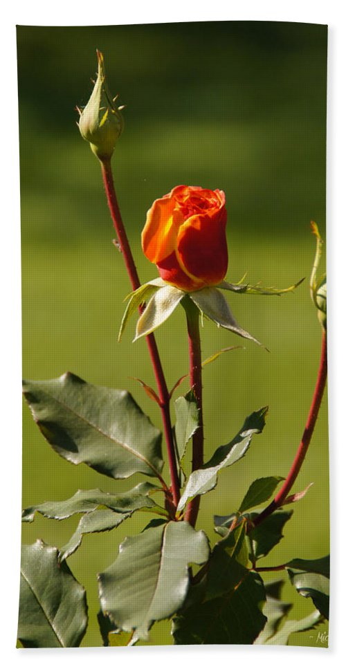 Rose Bath Sheet featuring the photograph Autumn Rose by Mick Anderson