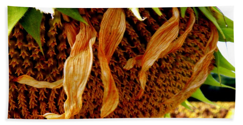 Sunflower Hand Towel featuring the photograph Autumn Sunflower by Lainie Wrightson