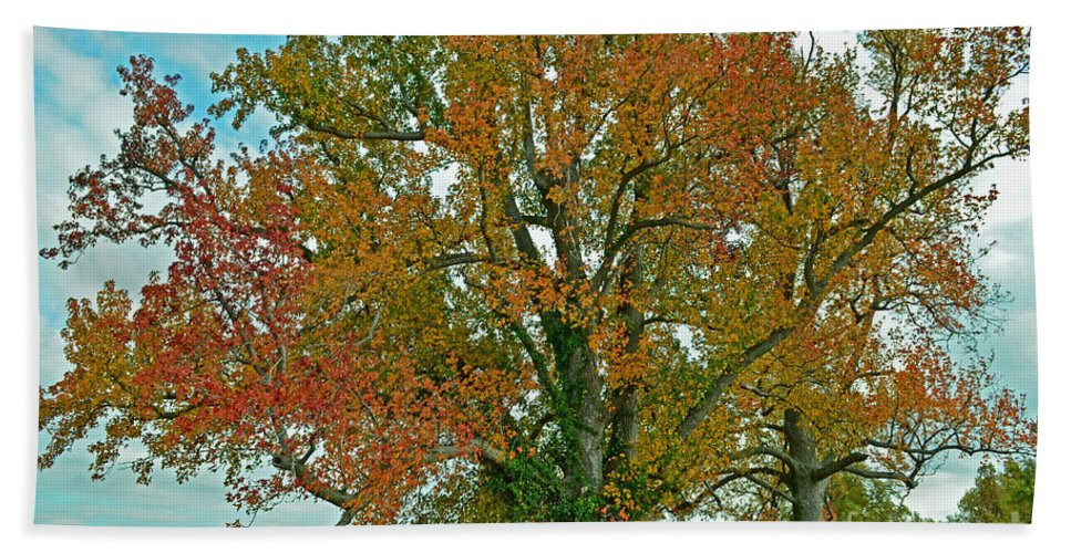 Nature Hand Towel featuring the photograph Autumn Sweetgum Tree by Debbie Portwood