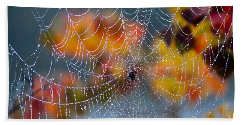 Spider Hand Towel featuring the photograph Autumn Web by Joan McCool