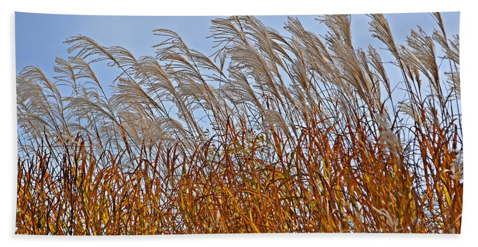 Afternoon Bath Sheet featuring the photograph Autumn Wind Through The Grass by Mary Machare