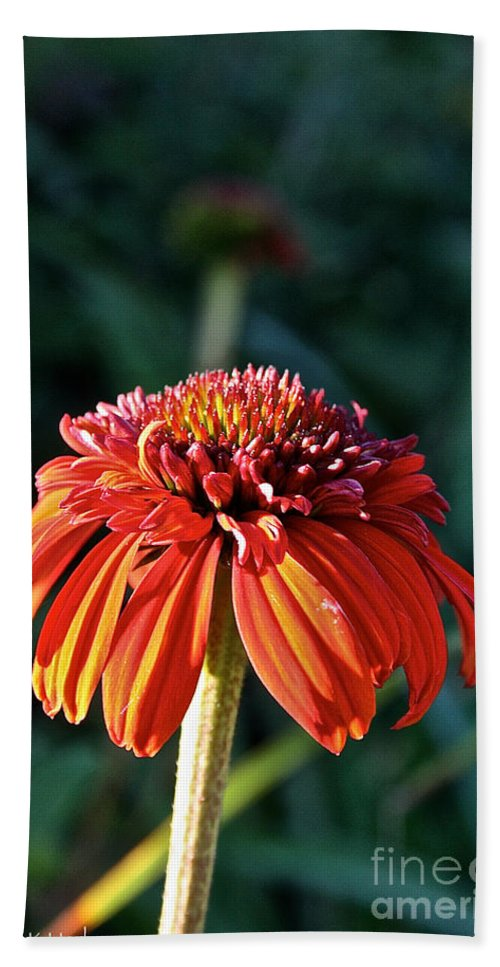 Outdoors Hand Towel featuring the photograph Autumn's Cone Flower by Susan Herber