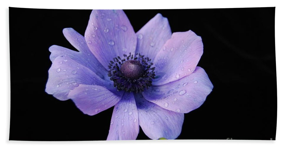 Flower Bath Sheet featuring the photograph Awkward Anemone by Terri Winkler