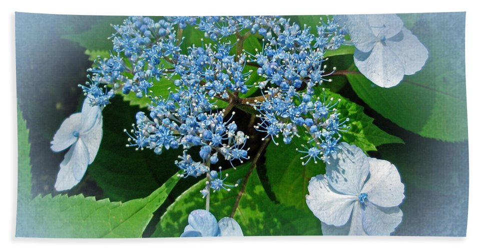 Hydrangea Bath Sheet featuring the photograph Baby Blue Lace Cap Hydrangea by Mother Nature