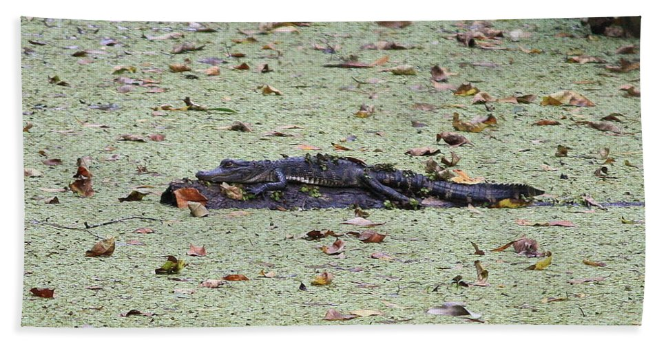 Gator Bath Sheet featuring the photograph Baby Gator In The Swamp by Carol Groenen