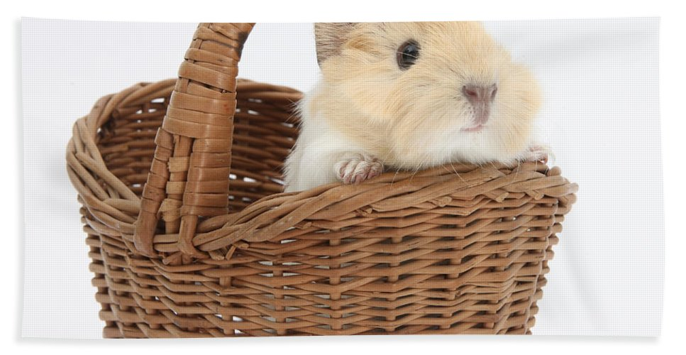 Nature Hand Towel featuring the photograph Baby Guinea Pig In A Wicker Basket by Mark Taylor