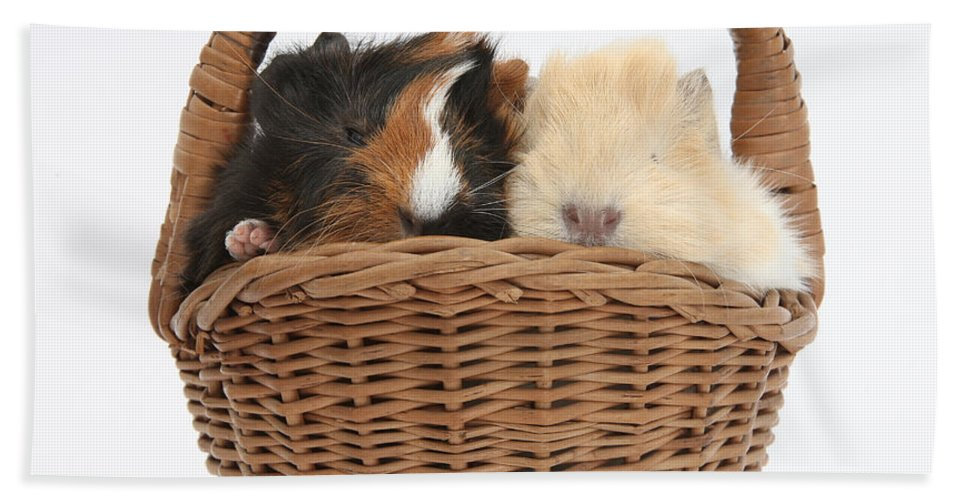 Nature Hand Towel featuring the photograph Baby Guinea Pigs In A Wicker Basket by Mark Taylor