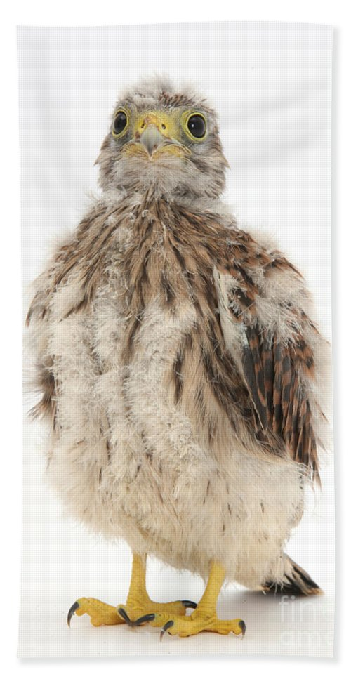 Nature Hand Towel featuring the photograph Baby Kestrel by Mark Taylor