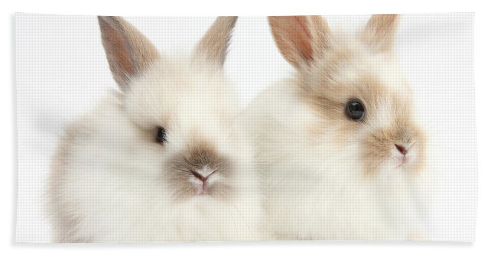 Nature Hand Towel featuring the photograph Baby Lionhead-lop Bunnies by Mark Taylor