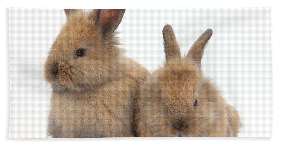 Nature Hand Towel featuring the photograph Baby Lionhead Rabbits by Mark Taylor