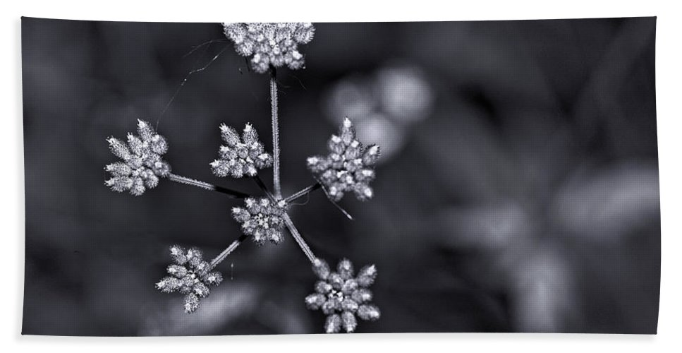 Flowers Bath Sheet featuring the photograph Baby Queen Anne's Lace Monochrome by Steve Harrington