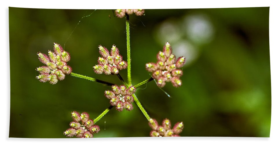 Flowers Bath Sheet featuring the photograph Baby Queen Anne's Lace by Steve Harrington