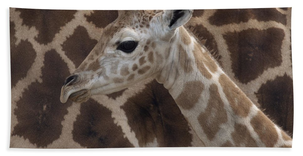 Mp Hand Towel featuring the photograph Baby Rothschild Giraffe by Zssd