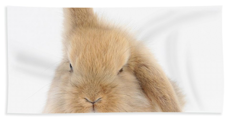 Animal Hand Towel featuring the photograph Baby Sandy Lop Rabbit by Mark Taylor