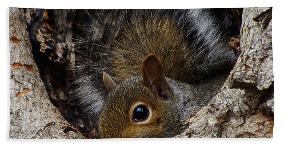 Photography Bath Sheet featuring the photograph Baby Squirrel by Jenny Gandert