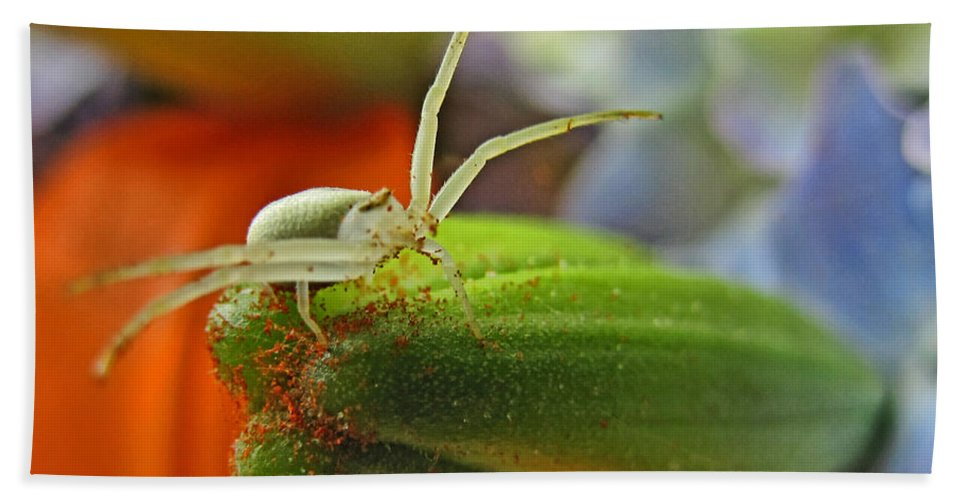 Nature Hand Towel featuring the photograph Back Off by Debbie Portwood