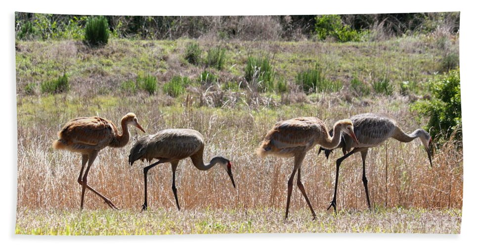 Sandhill Cranes Bath Sheet featuring the photograph Back To The Salt Mines by Carol Groenen