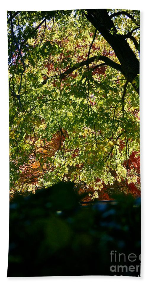 Tree Bath Sheet featuring the photograph Backlit Autumn by Susan Herber