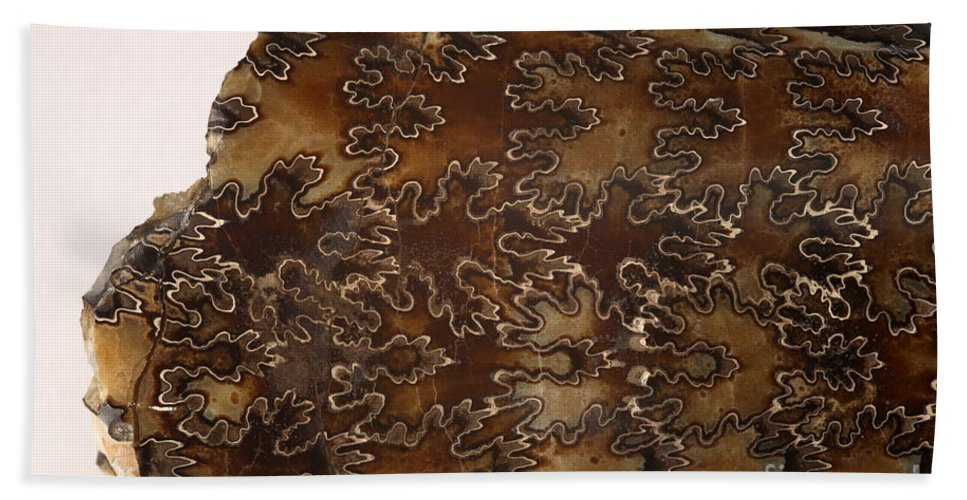 Animal Hand Towel featuring the photograph Baculites Fossil by Ted Kinsman