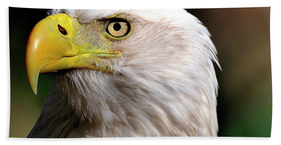 Bald Hand Towel featuring the photograph Bald Eagle Close Up by Bill Dodsworth