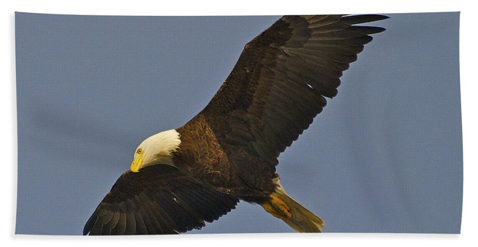 Eagle Bath Sheet featuring the photograph Bald Eagle Fly Over by TJ Baccari