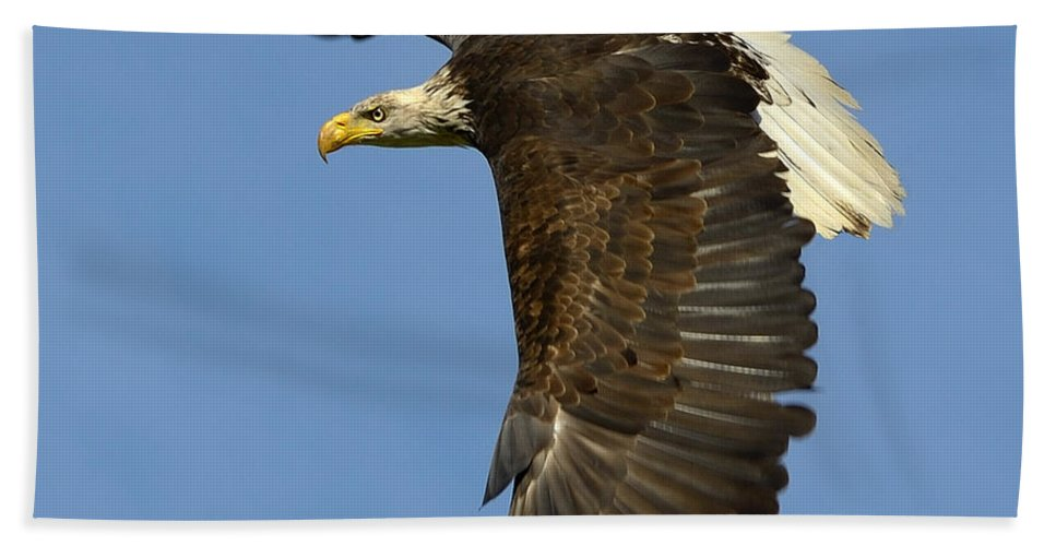 Bald Eagle Bath Sheet featuring the photograph Bald Eagle In Flight by Tony Beck
