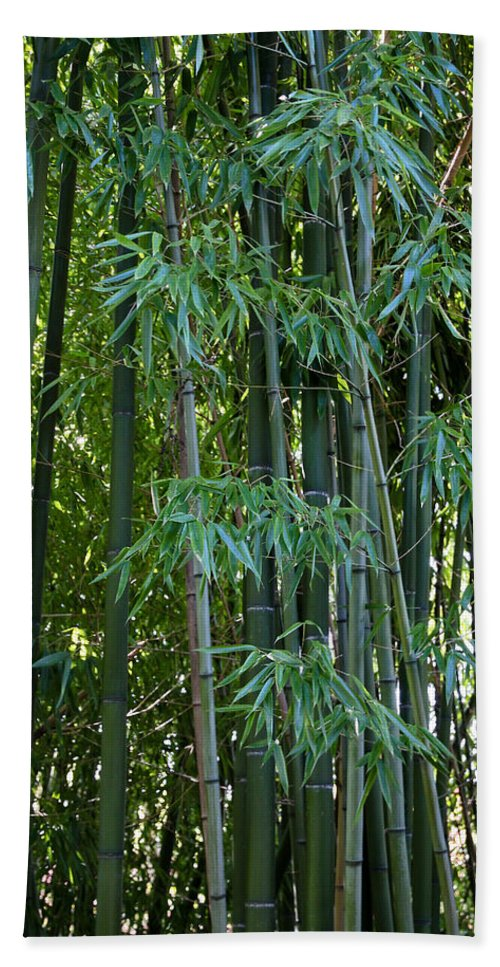 Bamboo Bath Sheet featuring the photograph Bamboo Tree by Athena Mckinzie