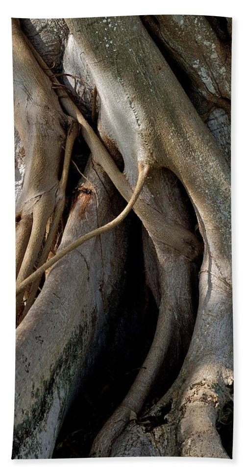 Banyan Tree Hand Towel featuring the photograph Banyan by Joseph Yarbrough