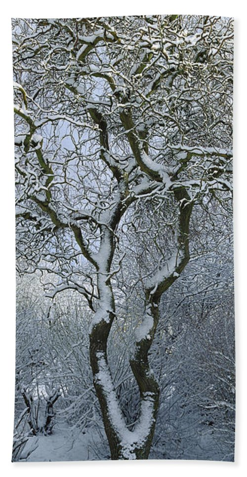 Mp Hand Towel featuring the photograph Bare, Snow-covered Tree In Winter by Cyril Ruoso