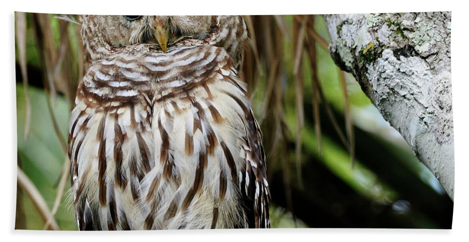 Captured Photo Along The St Johns River Hand Towel featuring the photograph Barred Owl by Bill Dodsworth