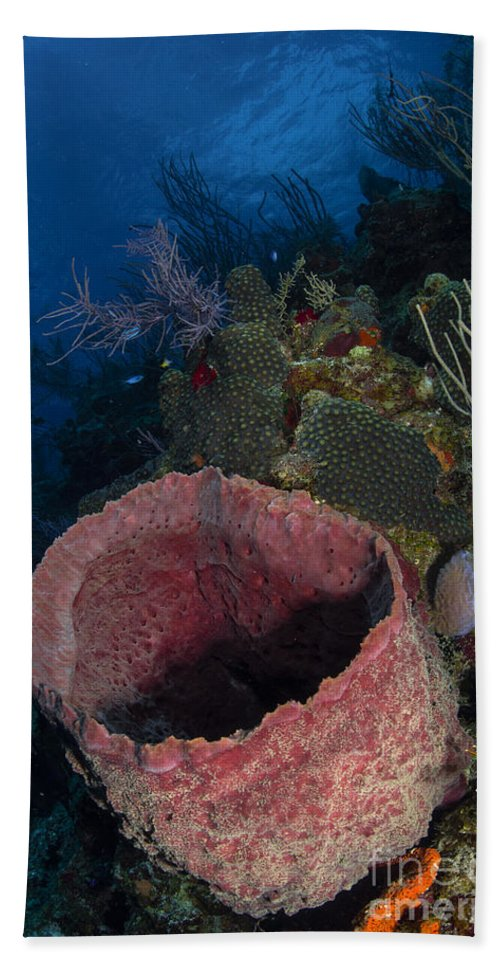Sea Life Hand Towel featuring the photograph Barrel Sponge Seascape, Belize by Todd Winner