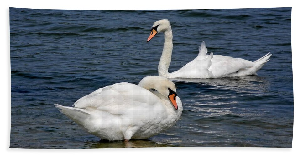 Swan Bath Sheet featuring the photograph Bathing Beauties by Lynda Lehmann