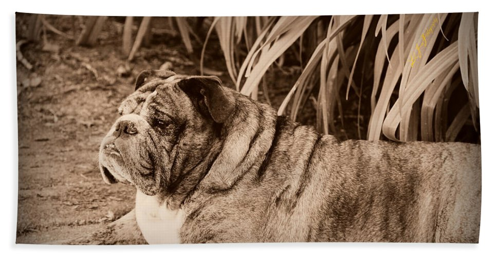 Bulldog Bath Sheet featuring the photograph Baydie by Jeanette C Landstrom