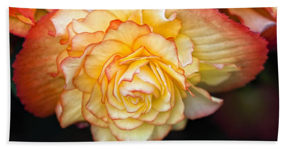 Begonia Bath Sheet featuring the photograph Be Gentle by Steve Harrington