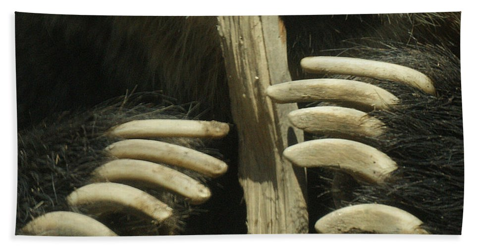 Bear Hand Towel featuring the photograph Bear Claws by Ernie Echols