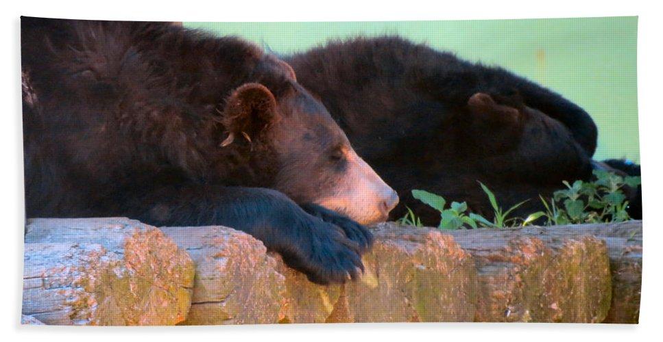 Bear Bath Sheet featuring the photograph Bear Nap by Art Dingo