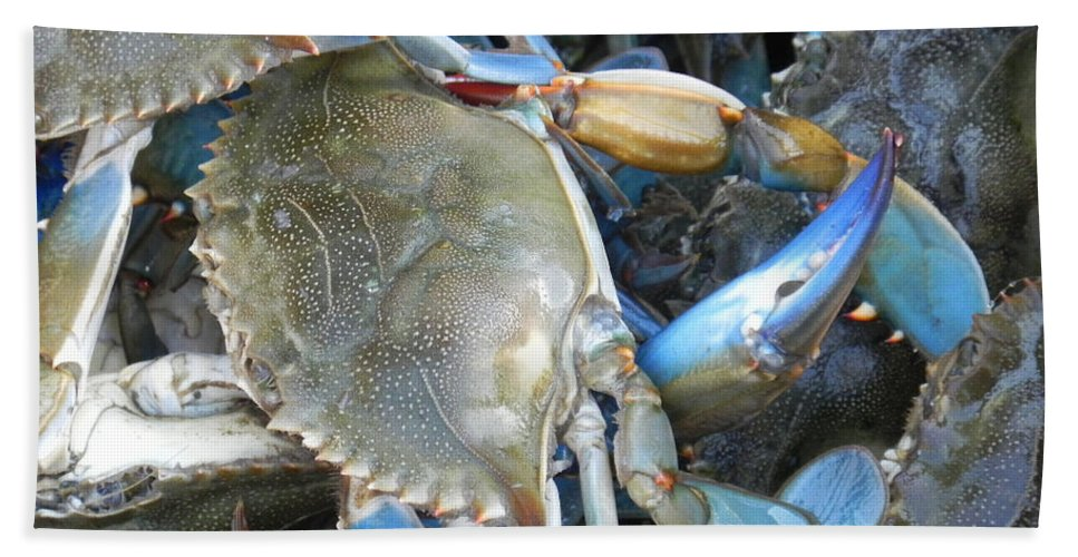 Crabs Hand Towel featuring the photograph Beaufort Blue Crabs by Patricia Greer
