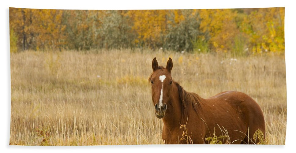 Horse Bath Sheet featuring the photograph Beautiful Grazing Horse by James BO Insogna