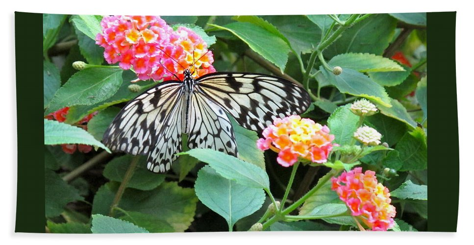Butterfly Hand Towel featuring the photograph Beautiful Butterfly And Flowers by Phyllis Kaltenbach