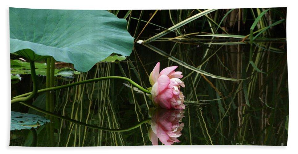 Nelumbo Lutea Nucifera Bath Towel featuring the photograph Beautiful Fallen Lotus by Byron Varvarigos