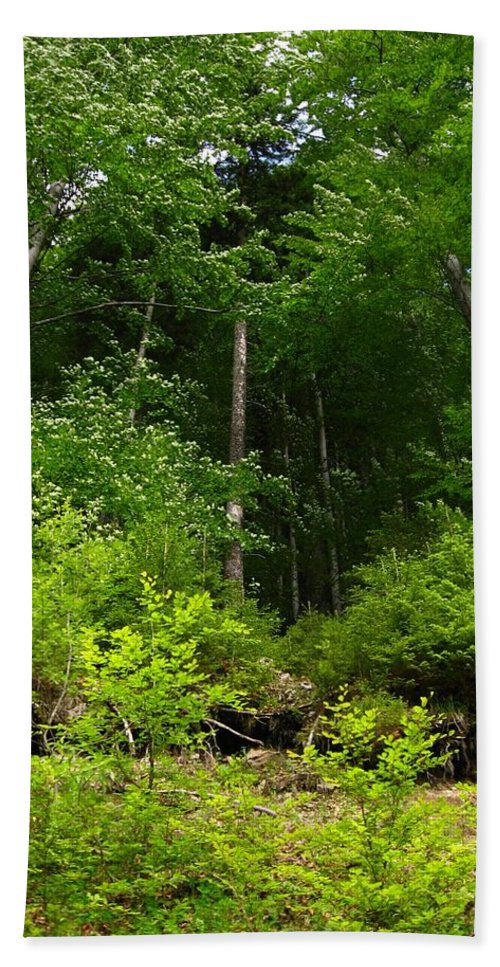 Forest Hand Towel featuring the photograph Beautiful Green by Alina Cristina Frent