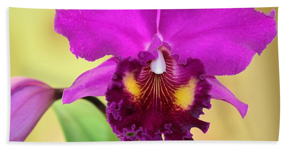 Orchid Hand Towel featuring the photograph Beautiful Hot Pink Orchid by Sabrina L Ryan