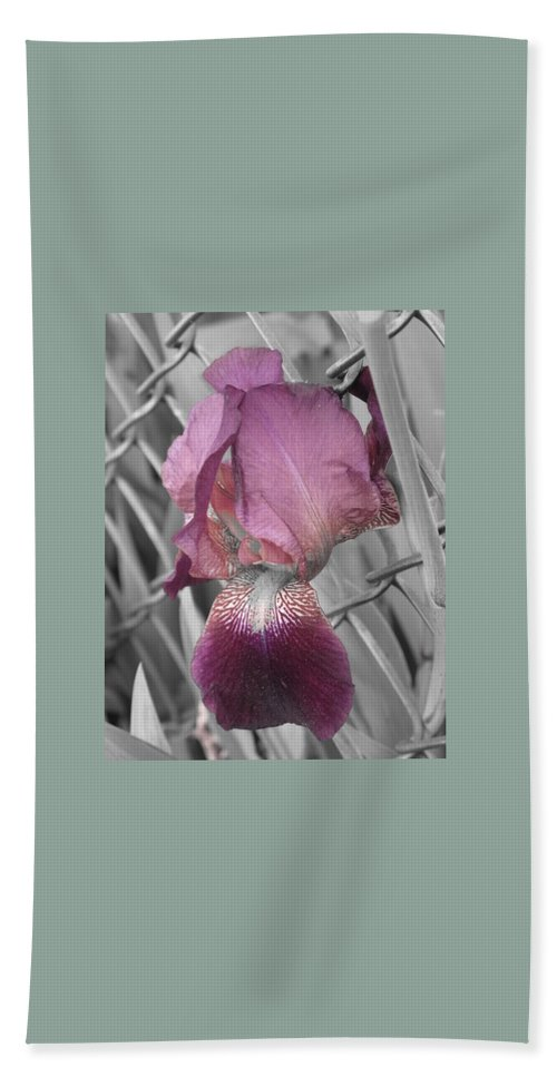 Purple Hand Towel featuring the photograph beautiful Iris by Michele Nelson
