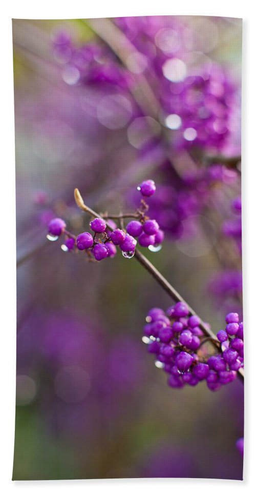 Beauty Berry Bath Sheet featuring the photograph Beauty Berry Explosion by Mike Reid