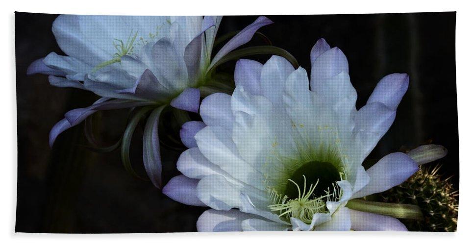White Echinopsis Bath Sheet featuring the photograph Beauty In The Desert by Saija Lehtonen