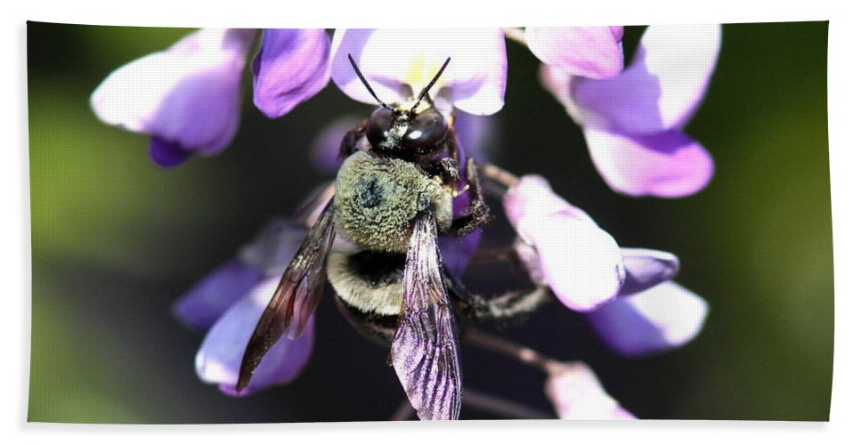 Bumble Bee Hand Towel featuring the photograph Bee And Blooms - Card by Travis Truelove